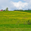 Beautiful pastures lands near Basket slough.