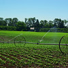 A row crop farm near Corvallis OR