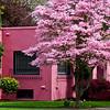 Pink on Pink, Albany Oregon