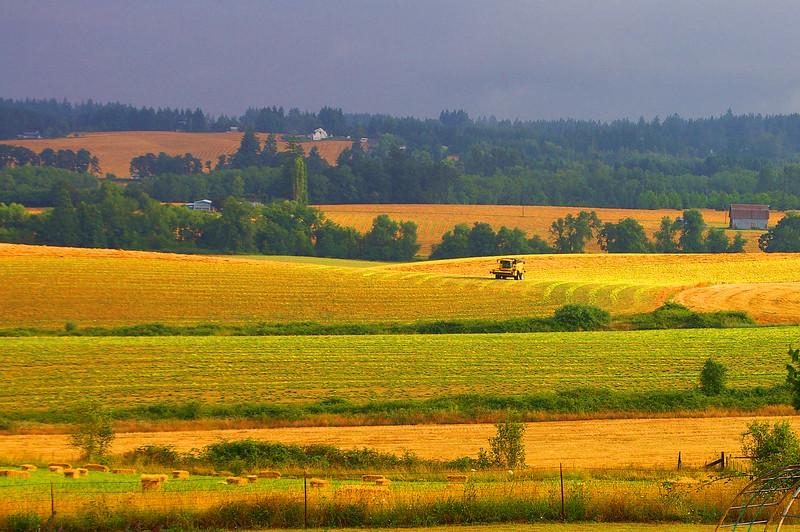 B0005263_edited-1.jpg  Harvest Morning Light-1