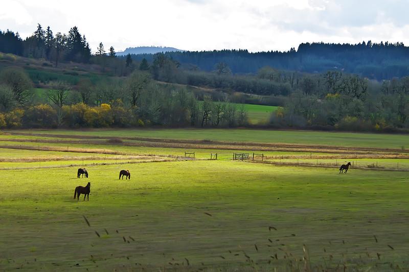 Horses enjoy the abundant forage of the Willamette Valley.