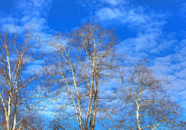 Trees and clouds in winter, Williamsburg, Virginia.