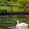 Olympic Swan!