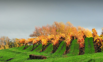 Wine Country Splendor