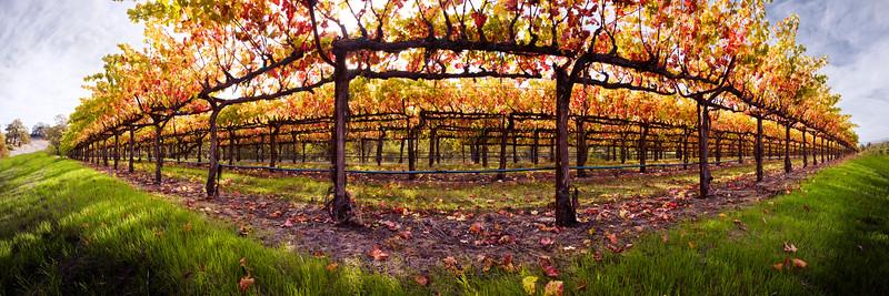 15) Beneath the Vines 200710312051