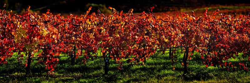 18) Fall Harvest 200911281604