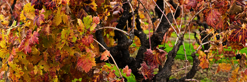 17) Fall Harvest 200811271314