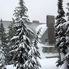 36  G Snowy Timberline V