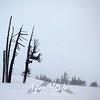 44  G Snowy Snags