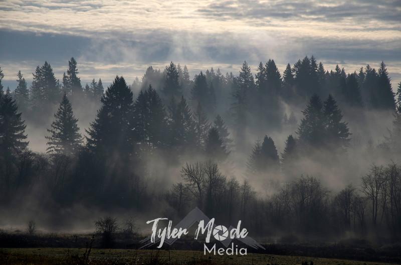 120  G Foggy Trees and Sun