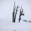 43  G Snowy Snags V
