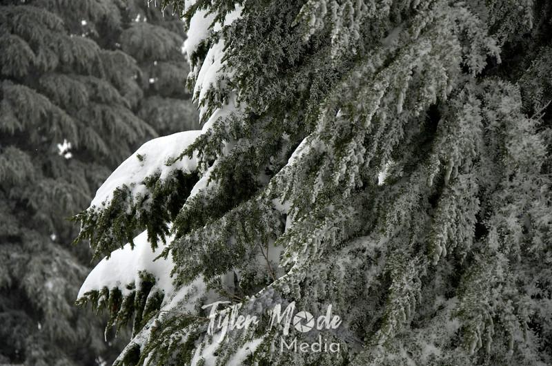 24  G Flocked Trees