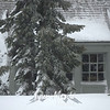 35  G Snowy Timberline