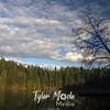 89  G BG Lake Tree