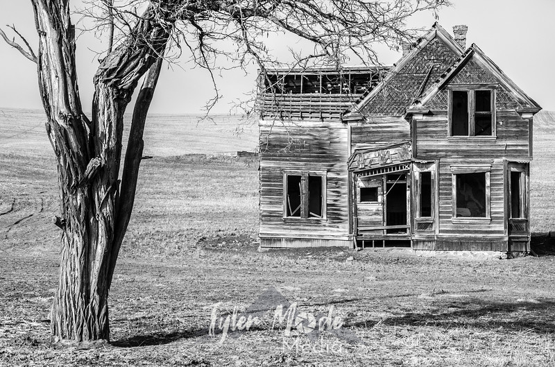 1  G Abandoned Home and Tree BW