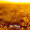 48  G Sunrise Dew