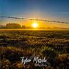 17  G Mt  Hood Sunrise Fog Fence
