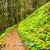 1  G Green Trail