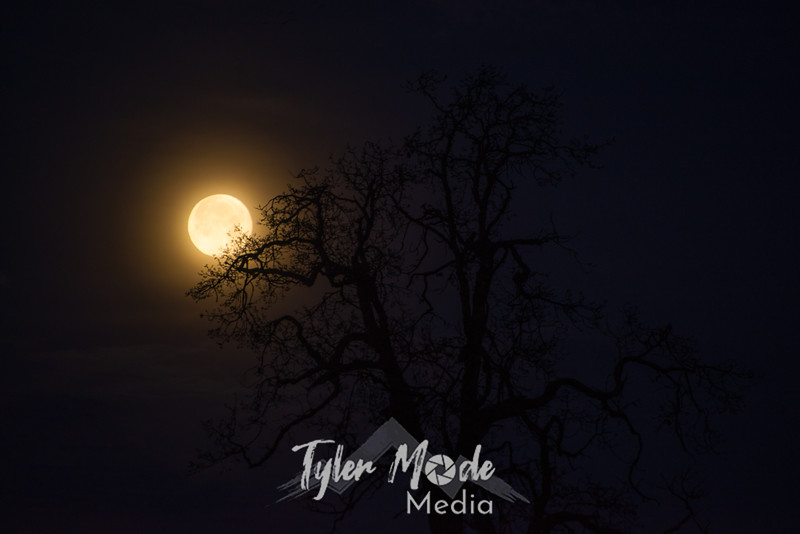 1  G Moon and Tree