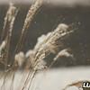 grass_snow_december_2017_010A