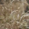 grass_snow_december_2017_007A
