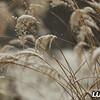 grass_snow_december_2017_009A