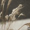 grass_snow_december_2017_002A