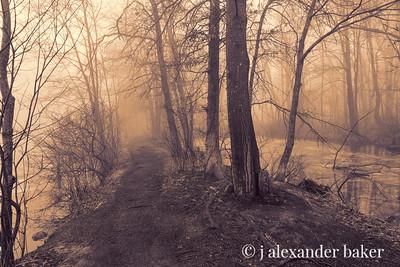 Misty Train, Celery Farm, Allendale, NJ