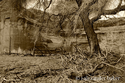 Deadfall Branches, Canyon De Chelly