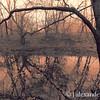 Tree and Creek, Celery Farm, Allendale, NJ