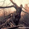Twisted Tree 2, Celery Farm, Allendale, NJ