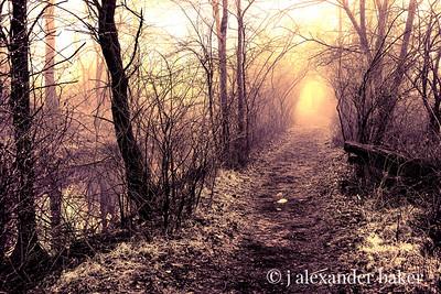 Vanishing Trail, Celery Farm, Allendale, NJ