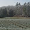 Frozen Landscape Senarclens 2007 (6)