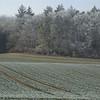 Frozen Landscape Senarclens 2007 (1)