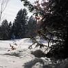Anzere_Winter_2009_0015