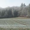 Frozen Landscape Senarclens 2007 (4)