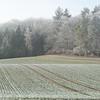 Frozen Landscape Senarclens 2007 (5)