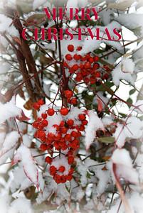 Nandino Berries DSC_0021