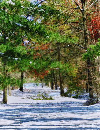 Autumn Leaves and Winter Snow