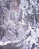 New snow, morning.