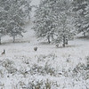 Mule Deer in Snow SS84671