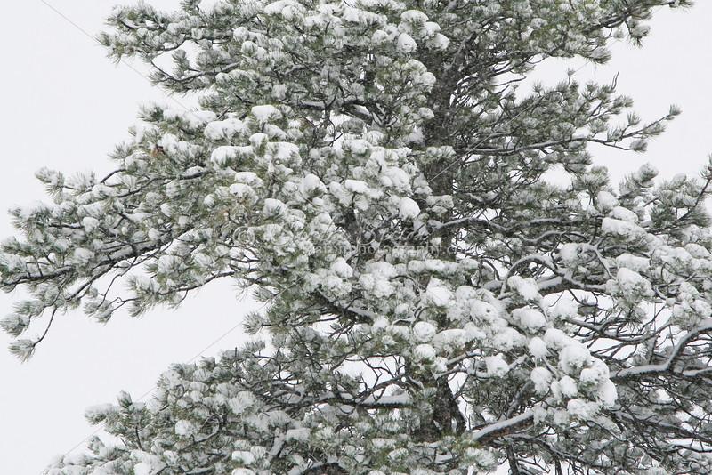 New Snow SS84698