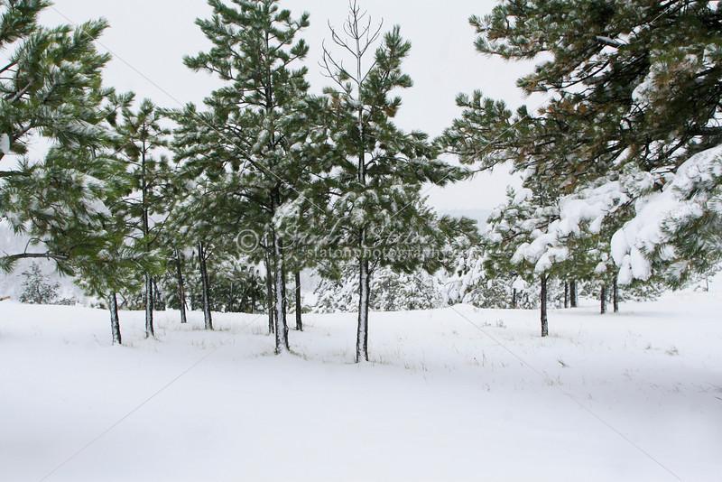 Fresh Snow SS84709
