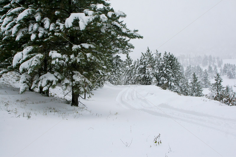 Mountain Snow Trail SS84747