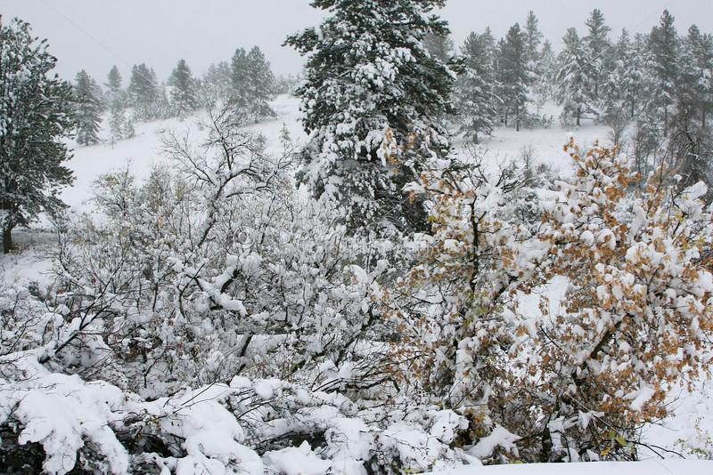 Mountain Snow SS84736