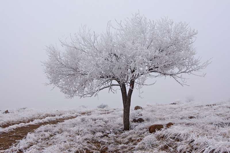 A lonely tree in the frosty landscape atop North Table Mountain near Golden, Colorado.