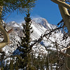 Wind-swept Longs Peak framed by wind-twisted aspens along the Emerald Lake trail; Rocky Mountain National Park, Colorado.
