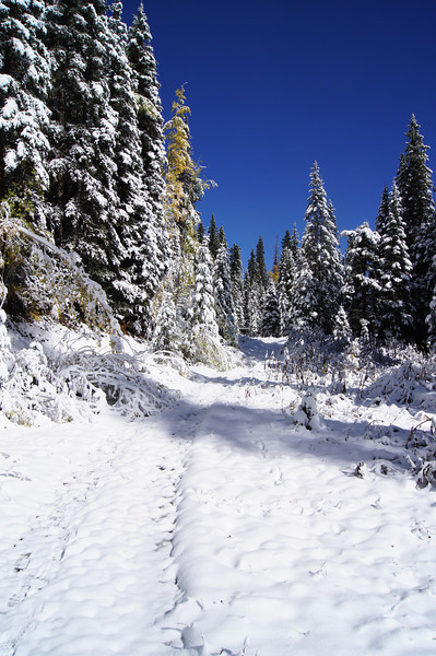 Autumn snow cover on the Blaine Basin trail; Mount Sneffels Wilderness, Colorado.