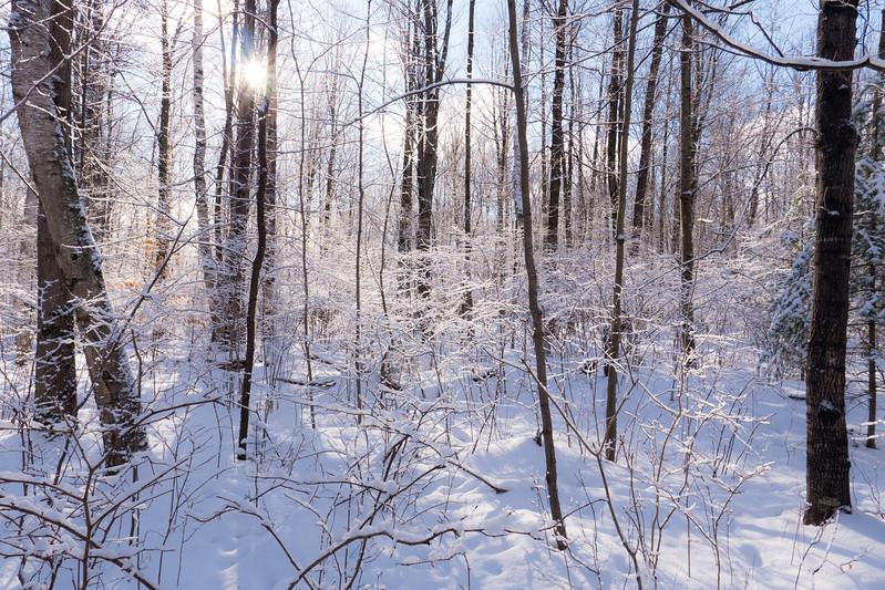 6 degrees of winter love