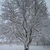 Backyard-Tree-1